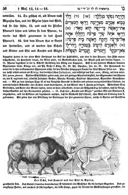 Philippson, Ludwig. Die Israelitische Bibel (Leipzig: Baumgartner's Buchhandlung, 1839), 56.